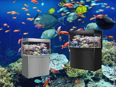 Entretien d 39 aquarium vente de fish spa le blog for Vente poisson aquarium particulier