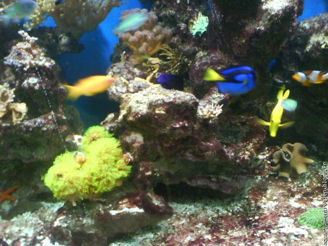 Entretien d\'aquarium-Vente de fish spa [blogs.fr Le blog ...