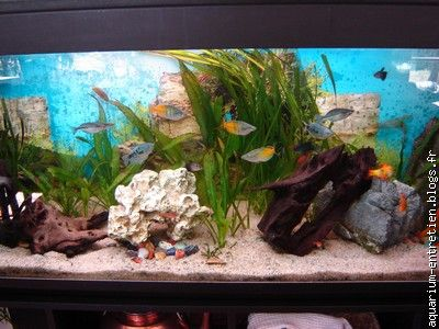 entretien d 39 aquarium vente de fish spa le blog multim dia 100 facile et gratuit. Black Bedroom Furniture Sets. Home Design Ideas