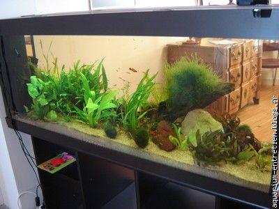 entretien d 39 aquarium vente de fish spa le blog. Black Bedroom Furniture Sets. Home Design Ideas