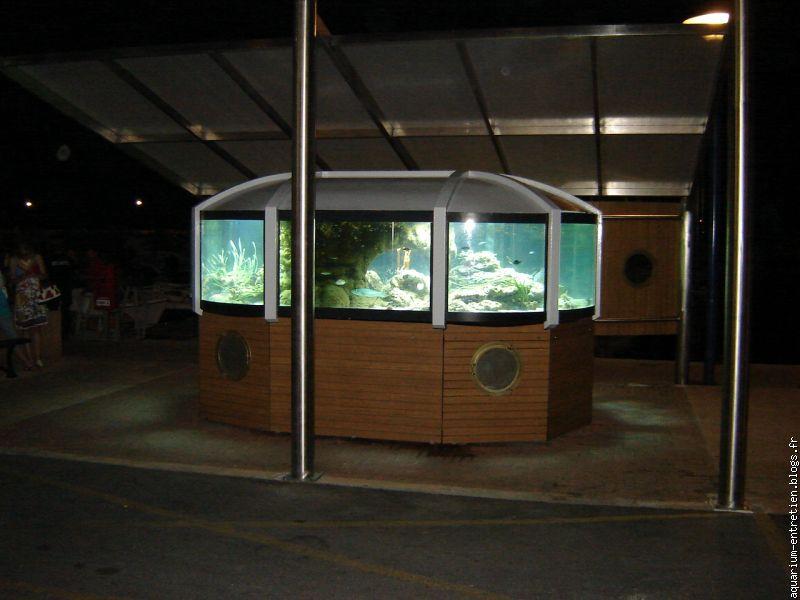 Beautiful Aquarium Region Paca Ideas - Transformatorio.us ...